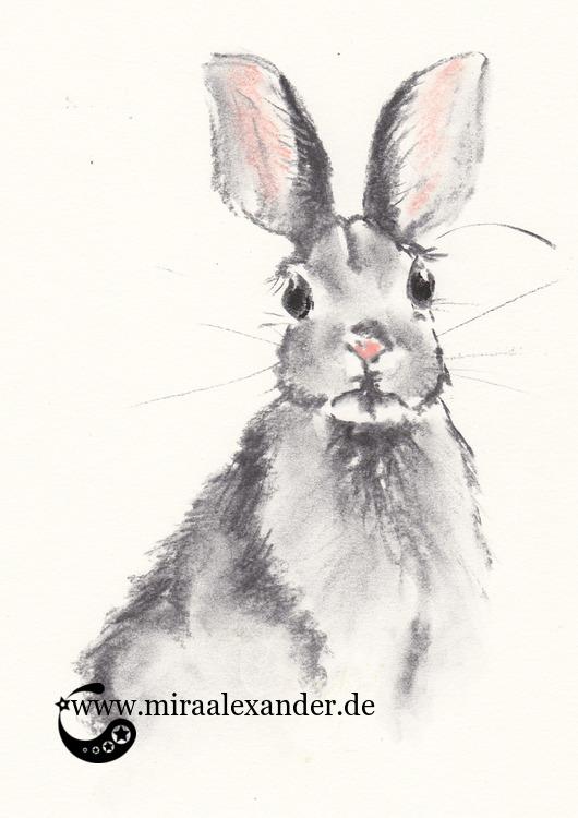 Das kleine Kaninchen von nebenan, von Mira Alexander. Eine schnelle Kohlezeichnung mit Pastellakzenten von einem neugierigen Kaninchen.