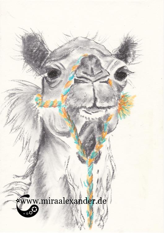 Ein Dromedar-Kopf, in Kohle und Pastell gezeichnet von Mira Alexander